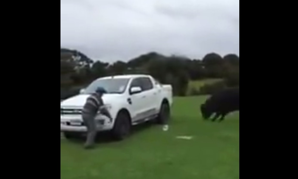 81 y/o Aussie defends Ford Ranger from raging bull.